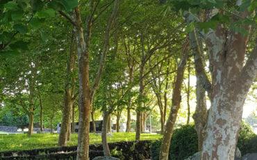 1 Parque urbano de Ponta Delgada Imagem do autor.